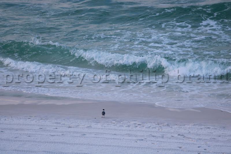 Beach Bum Bird